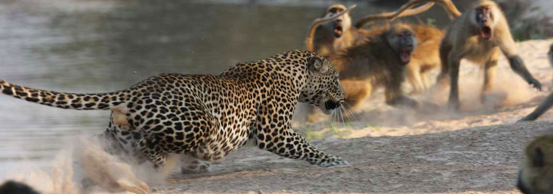 Tailor Made Zambia Safaris